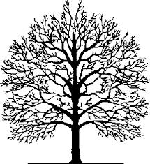 Clark Family Tree