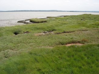 Salt marsh at East Tilbury