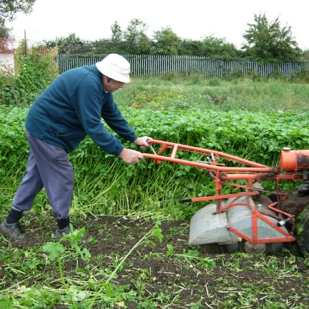 Turning in Mustard that was sown as a green manure